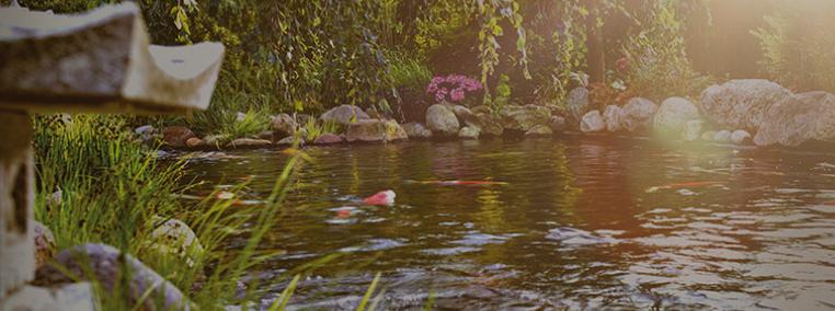 Belangrijke waterwaardes Koivijver